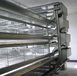H type poultry house